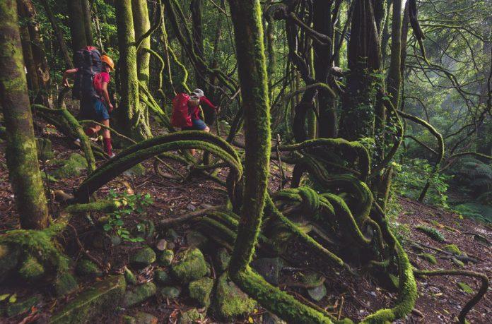 เดินป่า, เดินป่าในประเทศไทย, เดินป่าในไทย, ระดับความยาก