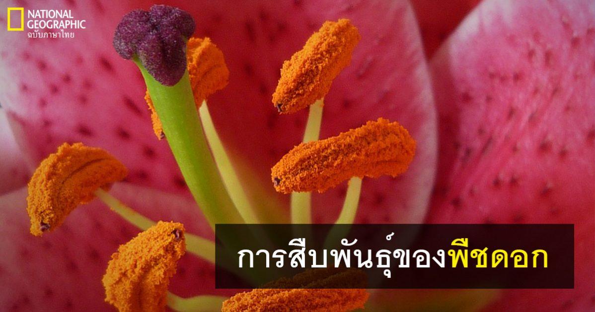 โครงสร้างของดอกไม้, ดอกไม้, พืช, การสืบพันธุ์ของพืช