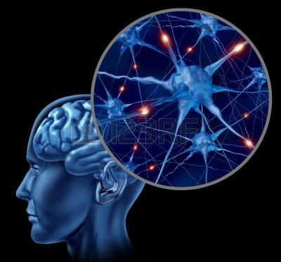 สมอง, ผงชูรส, เซลล์ประสาท, สารสื่อประสาท