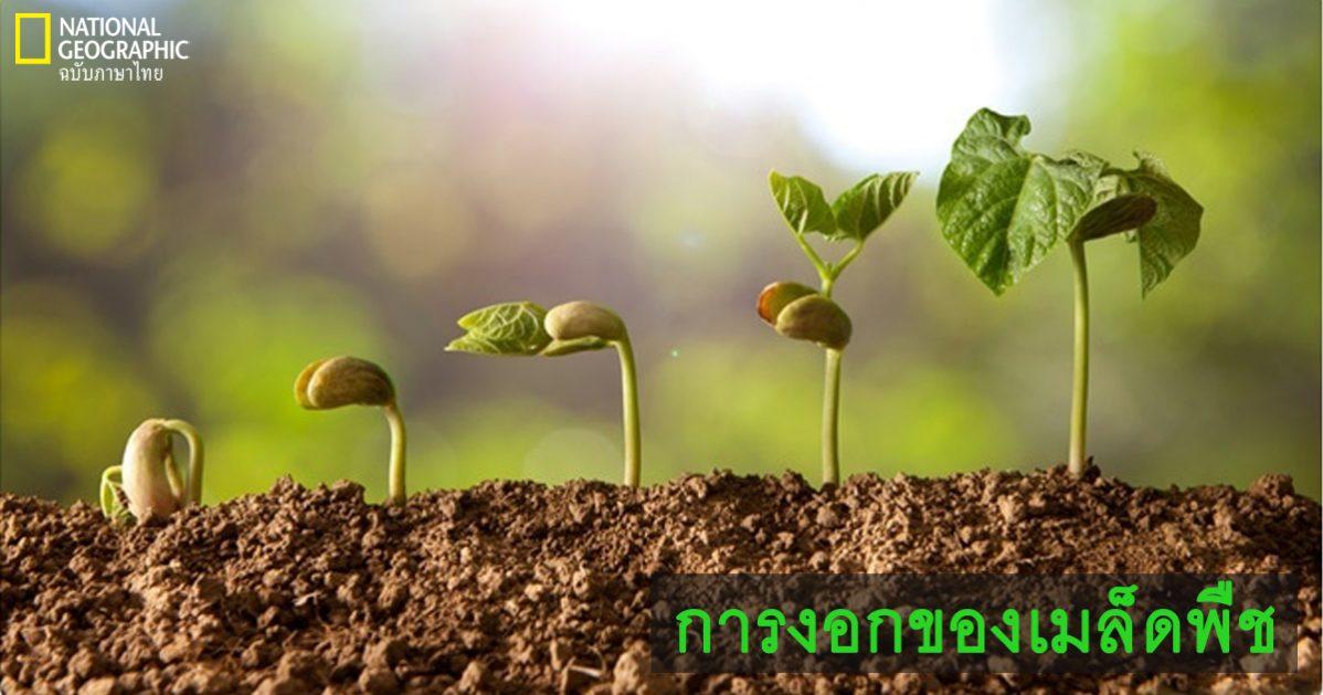 การงอกของเมล็ด, เมล็ดพืช, การเจริญเติบโตของพืช, การสืบพันธุ์ของพืชดอก