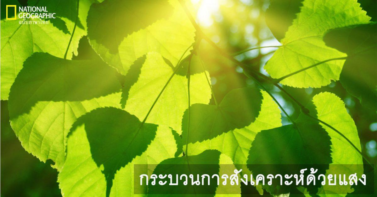 กระบวนการสังเคราะห์ด้วยแสง, การสังเคราะห์แสง, ใบไม้, พืช,