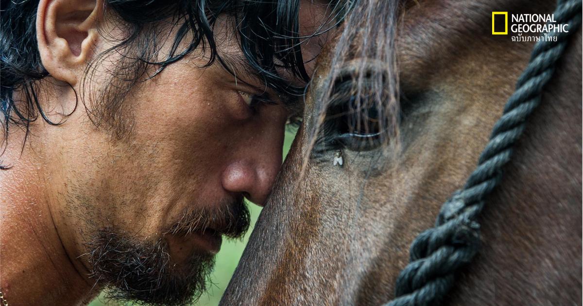 การขี่ม้า, การเลี้ยงม้า, คนเลี้ยงม้า, หมู่เกาะ, มาร์เคซัส, ชนเผ่า, ชาวเกาะ