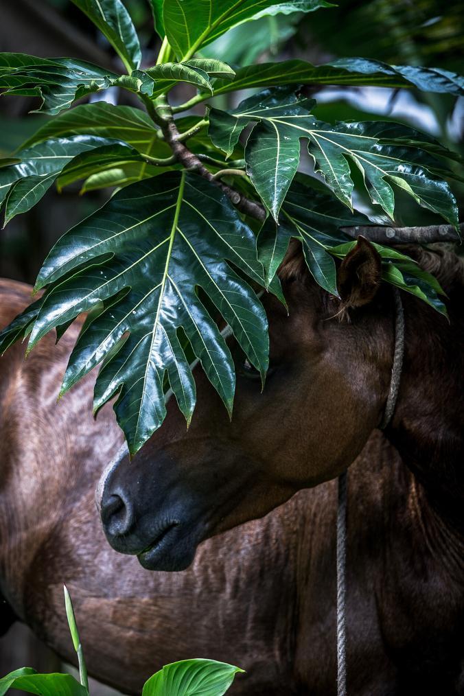ม้าป่า, ขี่ม้า, คนเลี้ยงม้า,