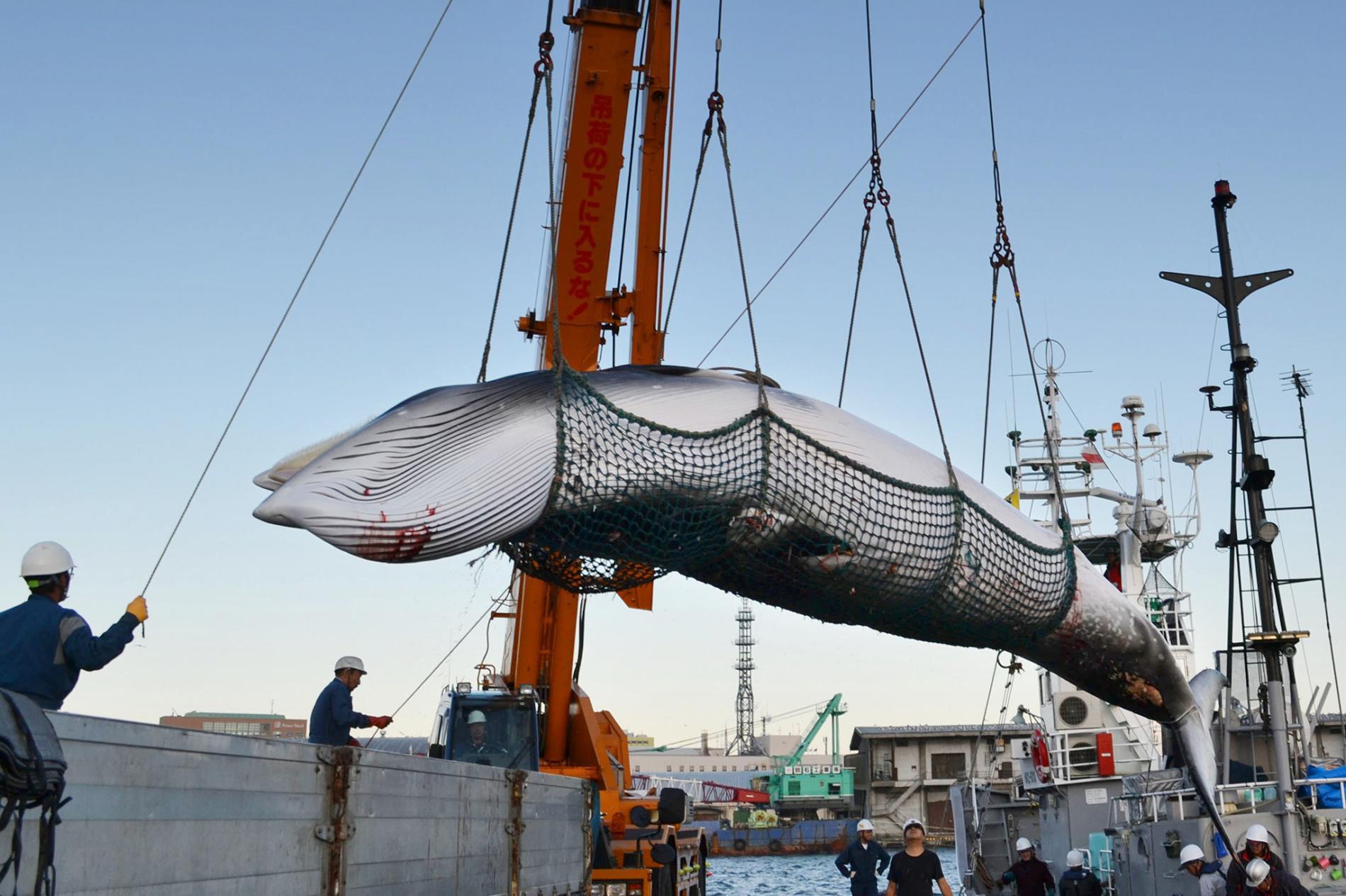 การล่าวาฬ