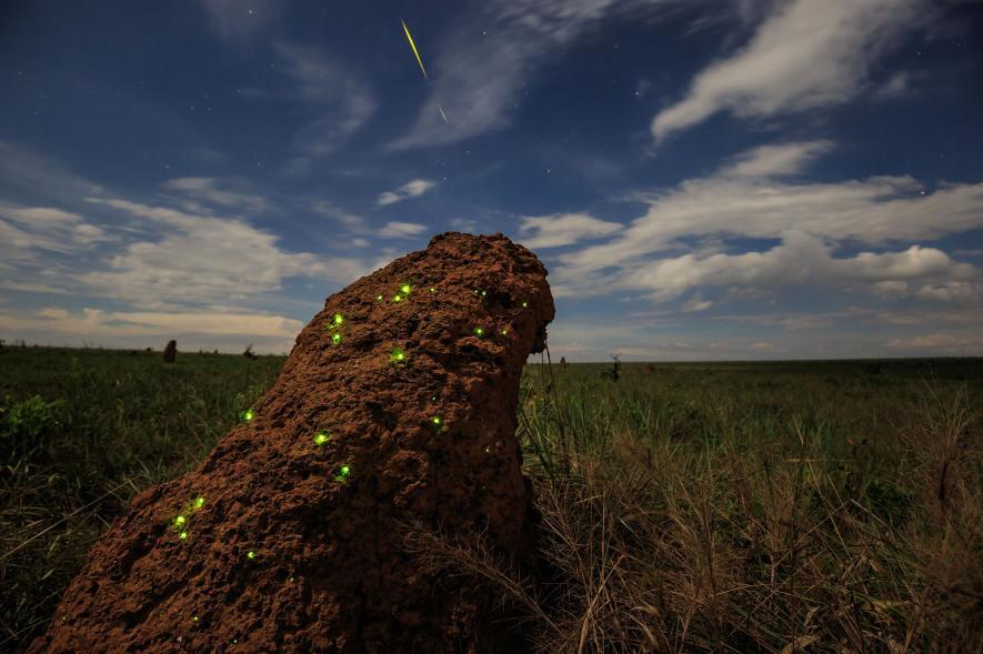 การเรืองแสงทางชีวภาพ