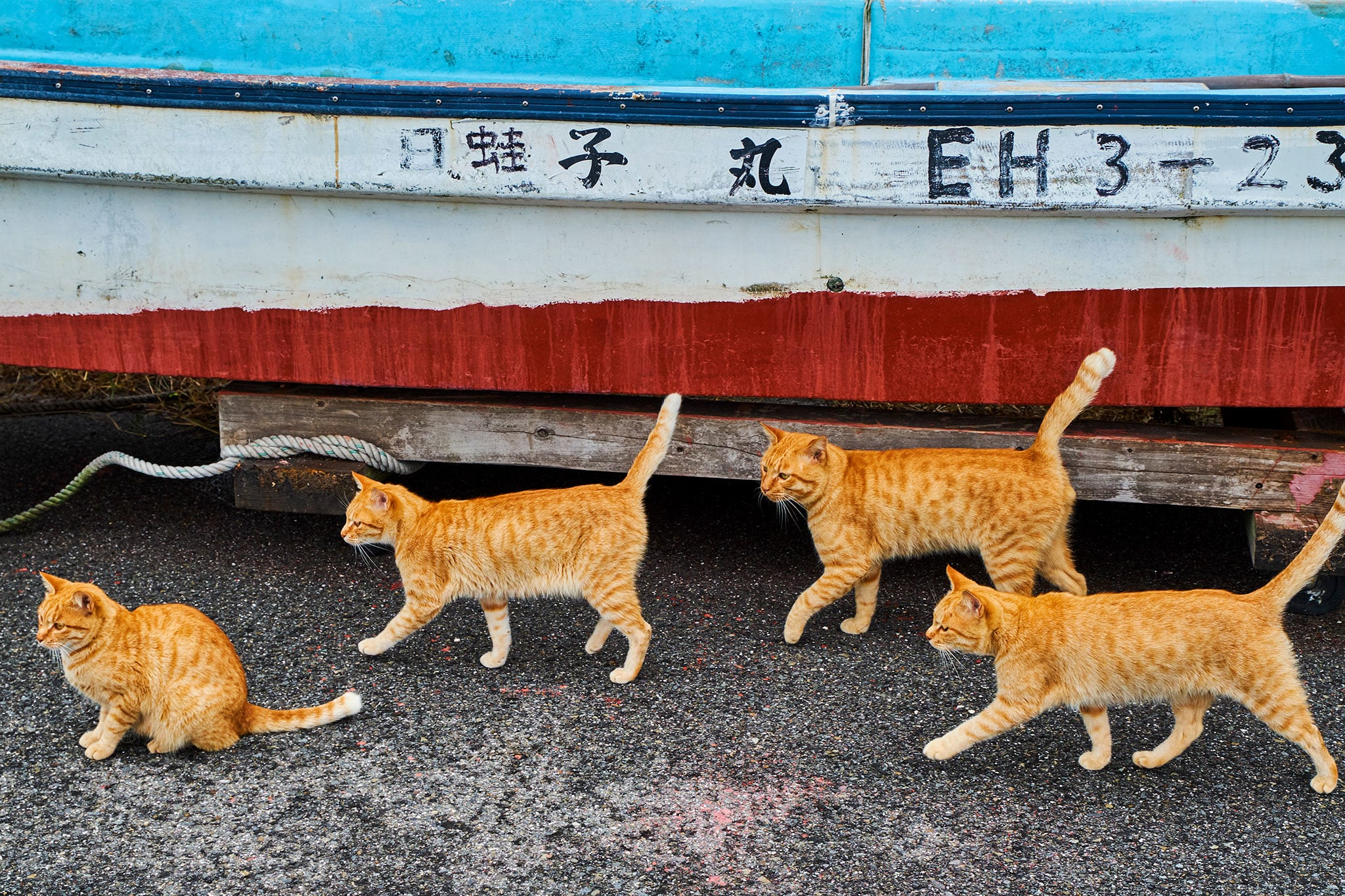 แมวข้างถนน