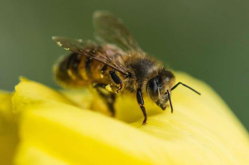 ดอกไม้, แมลงผสมเกสร, น้ำต้อย, ดอกไม้รับรู้คลื่นเสียงได้, ผึ้ง, แมลงผสมเกสร