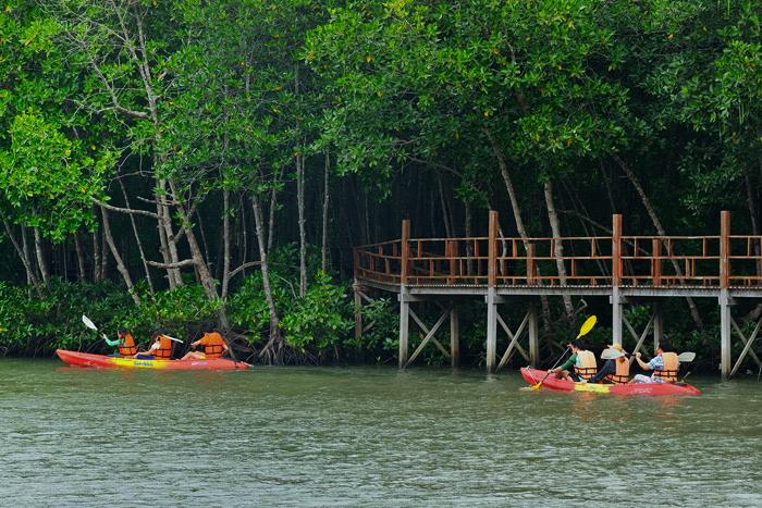 เส้นทางธรรมชาติศึกษาป่าชายเลน, อุทยานแห่งชาติหมู่เกาะชุมพร, เกาะ, ป่าชายเลน, พายเรือคายัก