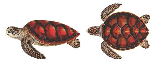 เต่าทะเล ,เต่า ,เต่าในประเทศไทย, เต่าตนุ