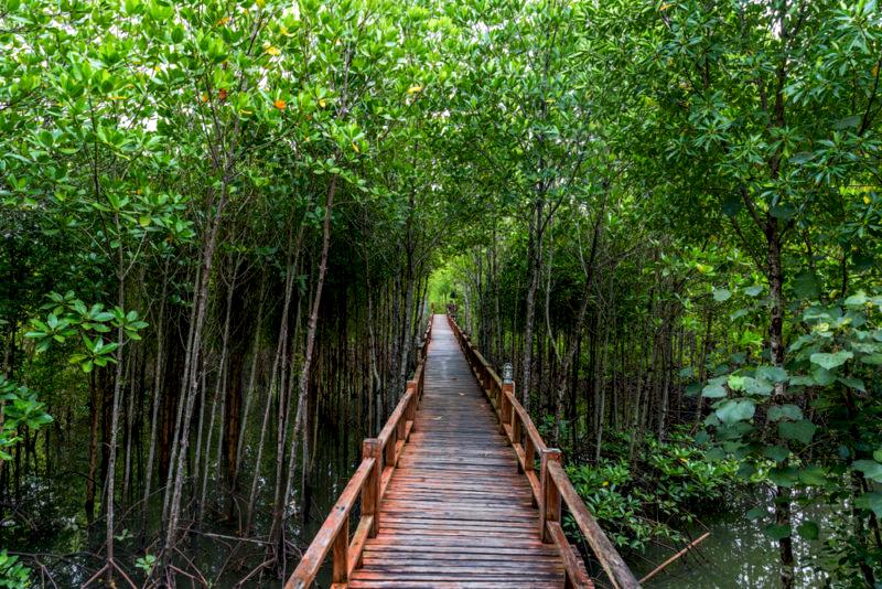 เส้นทางธรรมชาติศึกษาป่าชายเลน, อุทยานแห่งชาติหมู่เกาะชุมพร, เกาะ, ป่าชายเลน