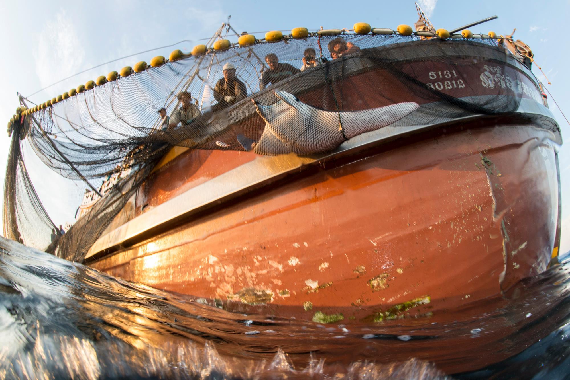 ่เรือประมง, อวน, ปลากระเบนติดอวน, ปลากระเบนปีศาจหางหนาม, ปลากระเบน