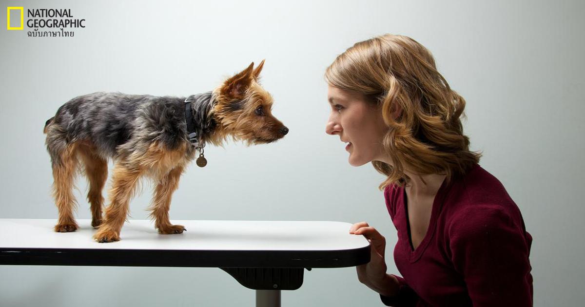 สุนัข, สัตว์, พฤติกรรมสัตว์, ความวิตกกังวล