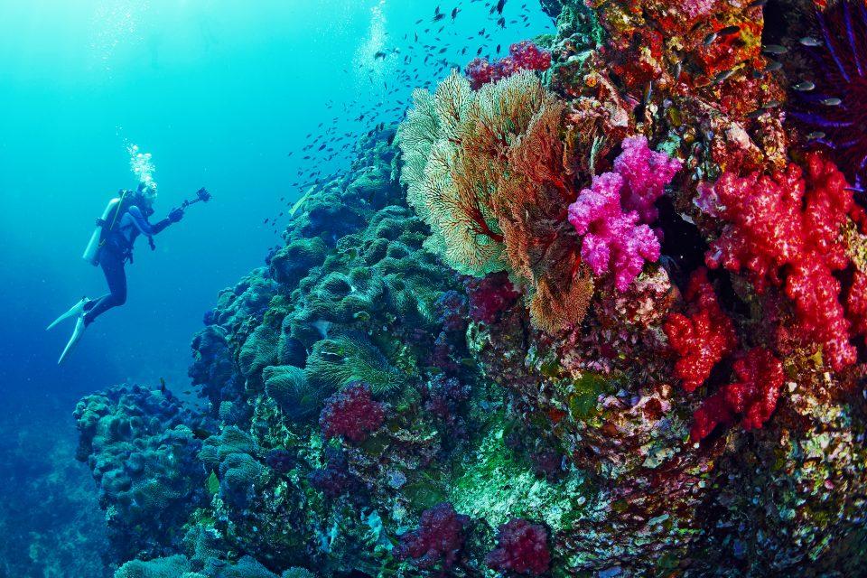 เรียนดำน้ำ, ดำน้ำ, ภาพถ่ายใต้ทะเล