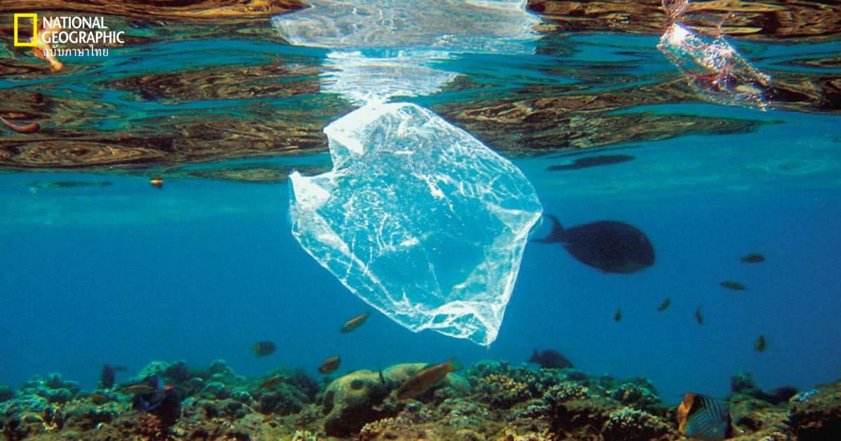 พลาสติกชีวภาพ