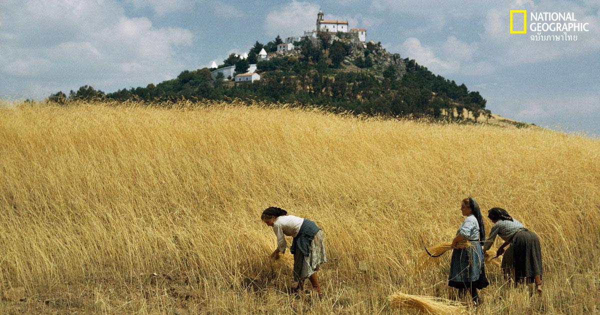 การปฏิวัติเกษตรกรรม