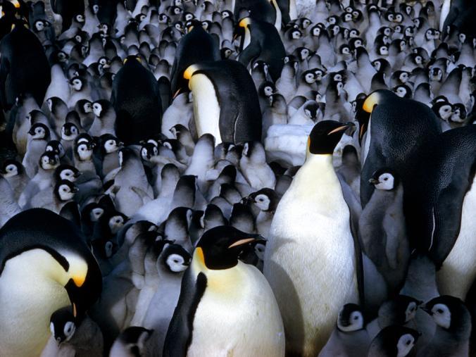 เพนกวินจักรพรรดิ