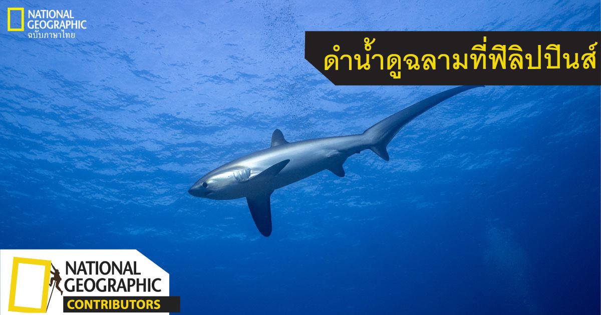 ฉลามหางยาว, ปลาฉลาม, ฉลาม, มาลาปัสกัว, ฟิลิปปินส์