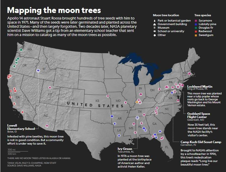 ต้นไม้ดวงจันทร์