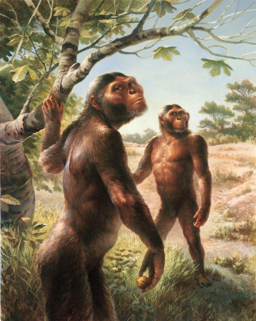 วิวัฒนาการของมนุษย์, วิวัฒนาการ,