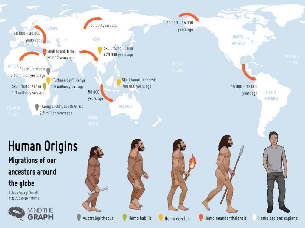 โฮโมเซเปียนส์, วิวัฒนาการของมนุษย์