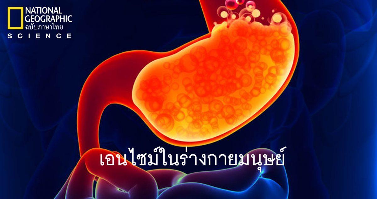 เอนไซม์, ร่างกายมนุษย์, การทำงานของเอนไซม์