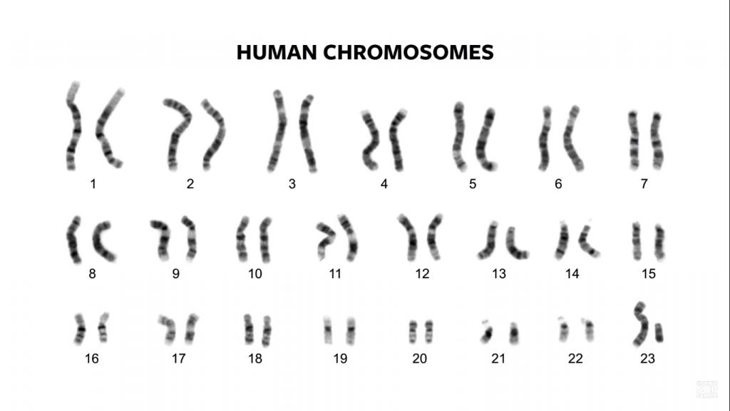 คาริโอไทป์, โครโมโซม, โครงสร้างโครโมโซม