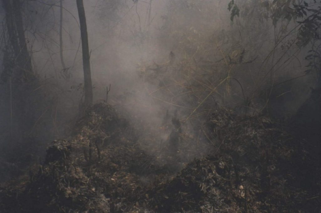 พรุควนเคร็ง, ไฟป่า, ไฟไหม้
