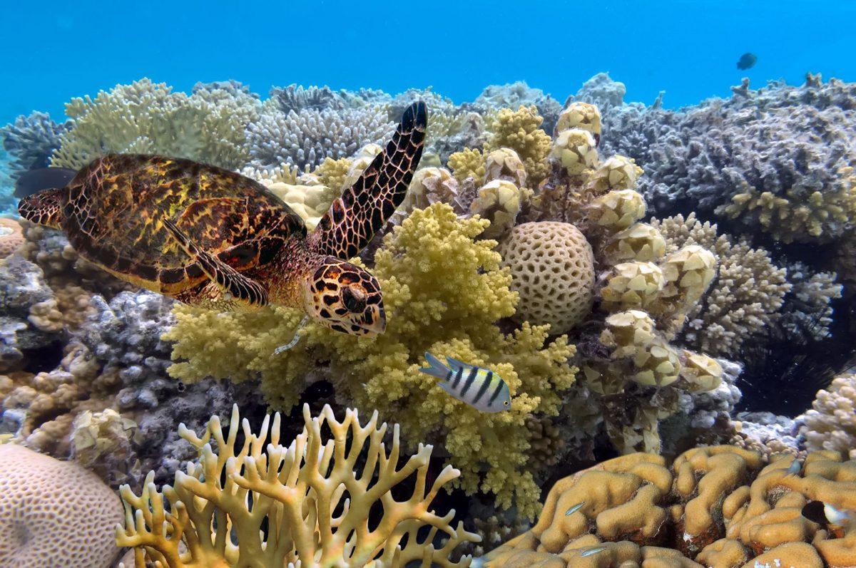 ระบบนิเวศ, ชายฝั่ง, แนวปะการัง, มหาสมุทร