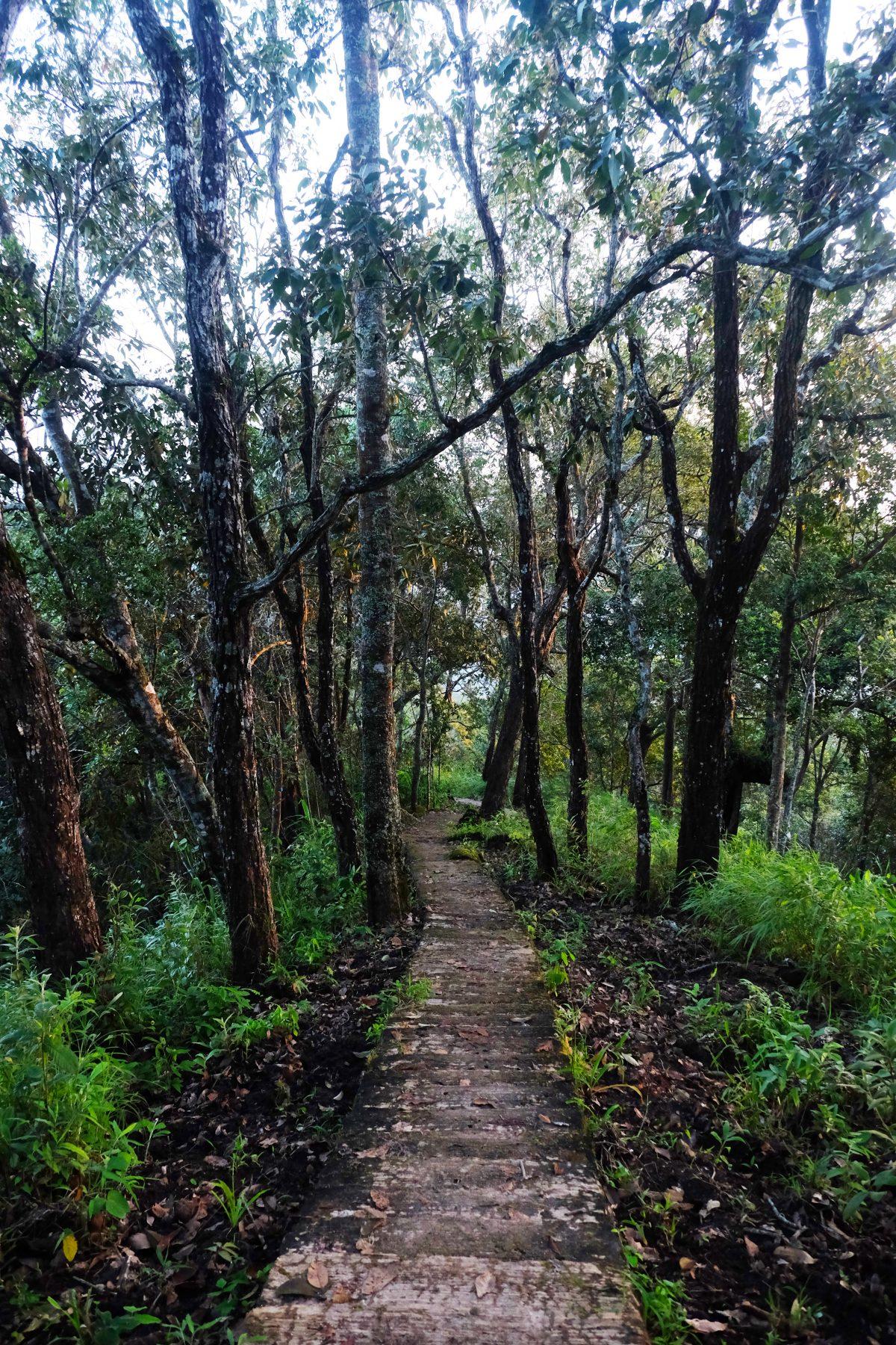 ดอยขุนตาล,อุทยานแห่งชาติดอยขุนตาล, เดินป่า