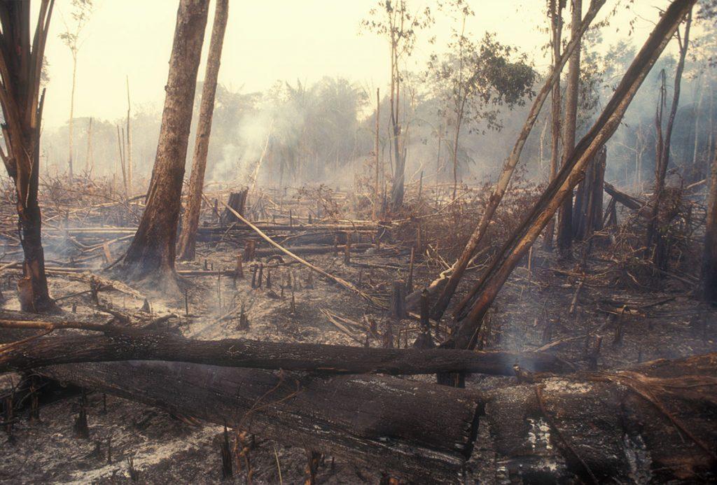 ก๊าซเรือนกระจก, ตัดไม้ทำลายป่า, เผาป่า