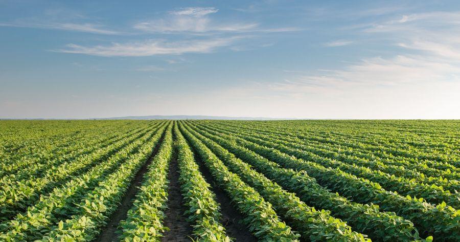 ระบบนิเวศ, แปลงเกษตร