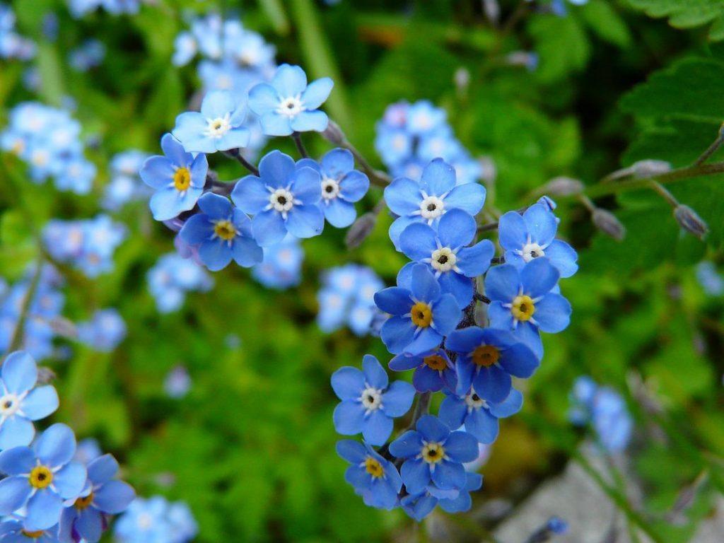 กลีบดอก, พืชใบเลี้ยงคู่