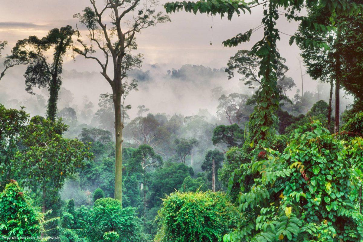 ระบบนิเวศ, ป่าฝนเขตร้อน