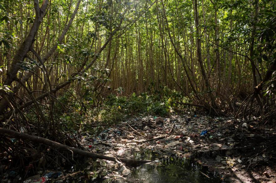 เกาะบาหลี, ป่าชายเลน, ขยะ