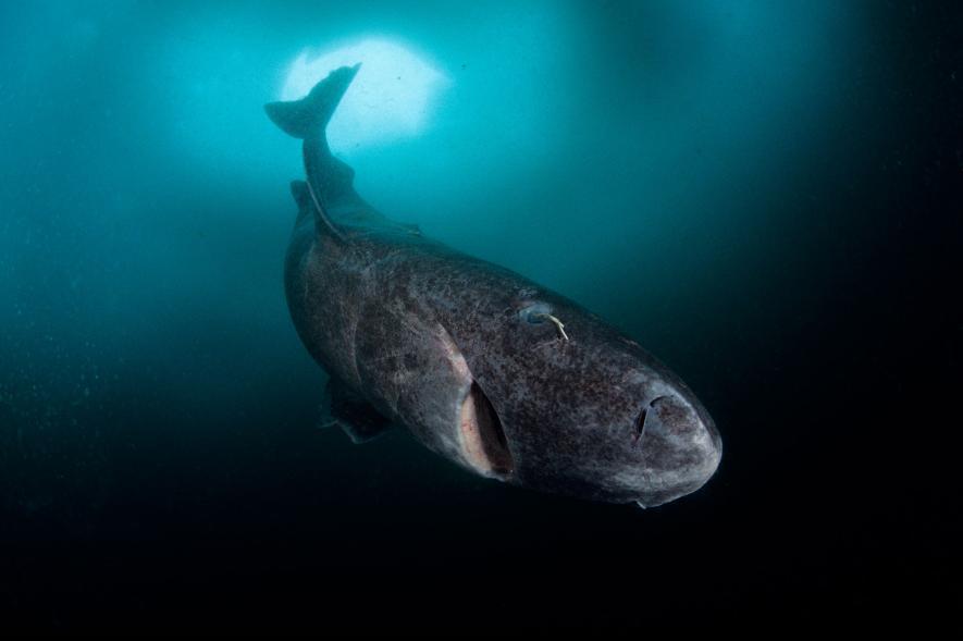 ปลากระดูกออ่อน, ปลาฉลาม, สัตว์มีกระดูกสันหลัง