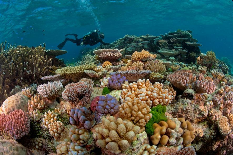 แนวปะการัง, ปะการังฟอกขาว, การเกิดปะการังฟอกขาว, ปะการัง
