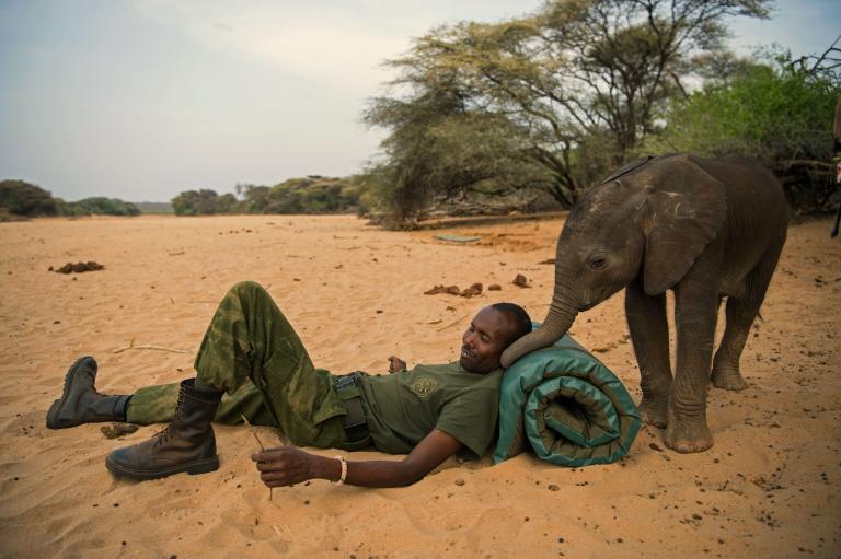 ช่างภาพหญิง, ช้างแอฟริกา