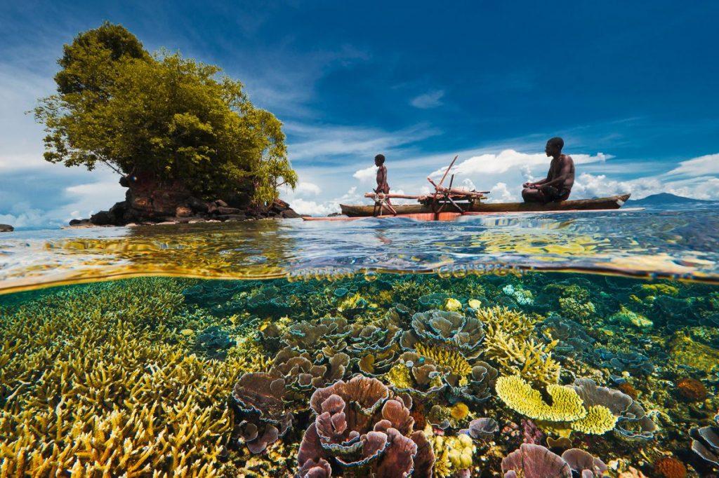 ปรากฏการณ์ทะเลกรด, มหาสมุทร, ทะเล, สิ่งมีชีวิตในทะเล