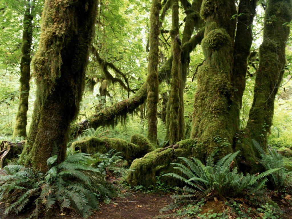 ประเภทของป่าไม้