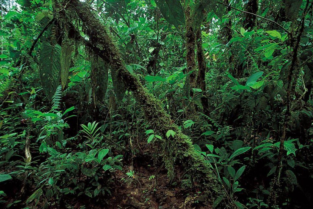 ประเภทของป่าไม้, ป่าฝนเขตร้อน, ป่าดิบเขา,