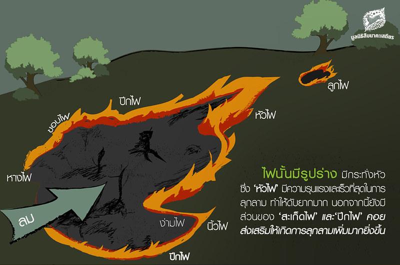ไฟป่า, รูปร่างของไฟ
