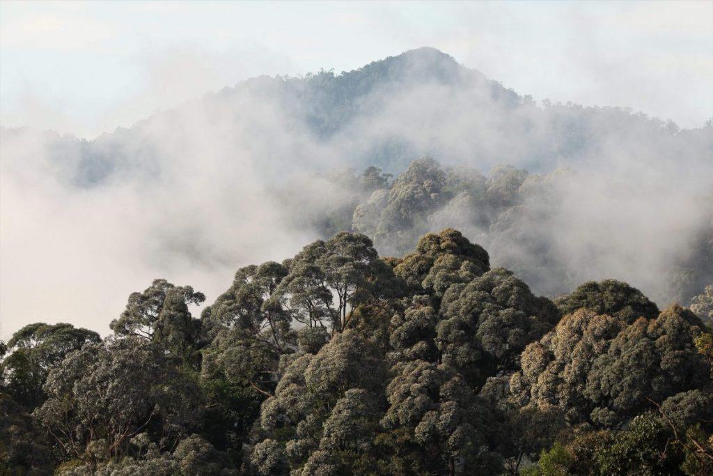 ฮาลา-บาลา, ป่าไม้,