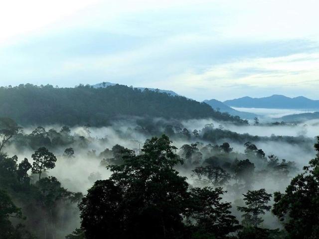ฮาลา-บาลา, ทะเลหมอก, ยามเช้า, ป่าฝน