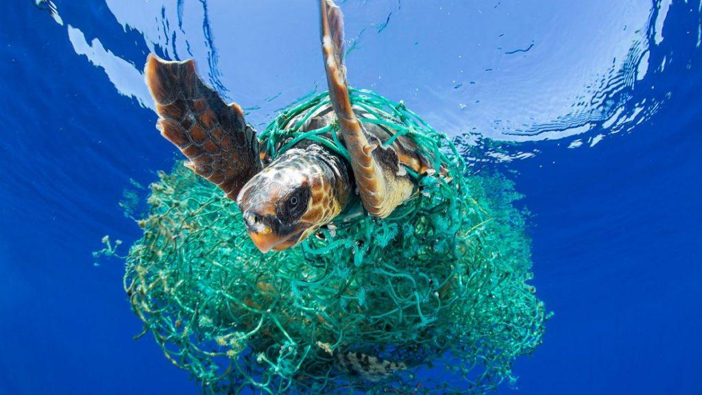 แพขยะ, ขยะพลาสติก, ขยะทะเล, ปัญหาสิ่งแวดล้อม, ปัญหาขยะ, ผลกระทบของขยะพลาสติก