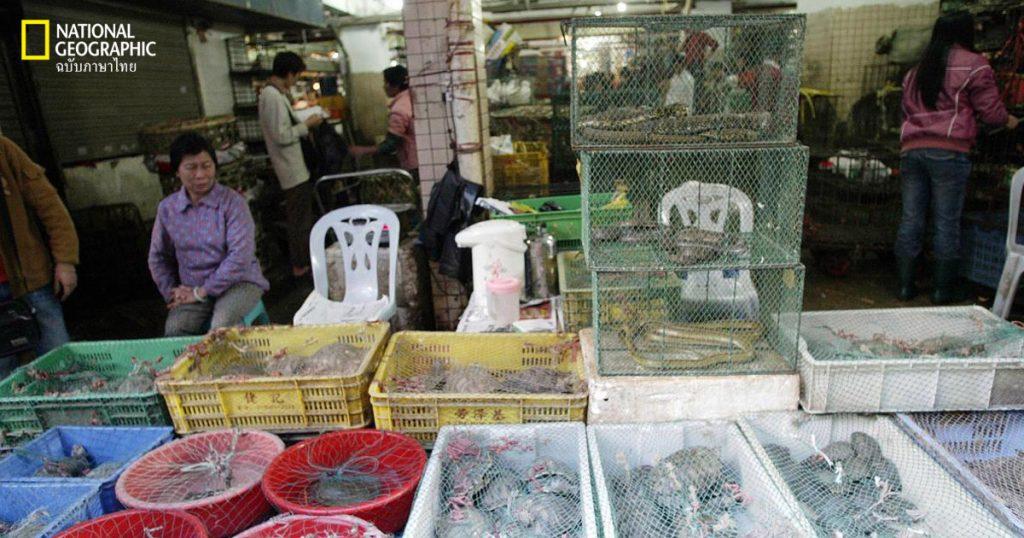 ตลาดค้าสัตว์ป่า, อู่ฮั่น, ไวรัสโคโรนา