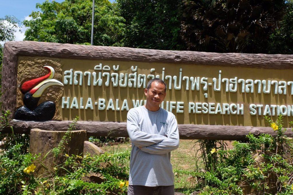 ฮาลา, บาลา, นกเงือก, โพรงรัง, รังนกเงือก, ธรรมชาติเมืองไทย