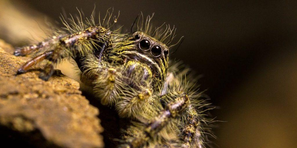 อาร์โทรโพดา, แมลง, การจำแนกสิ่งมีชีวิต, อนุกรมวิธาน, สัตว์ขาข้อ