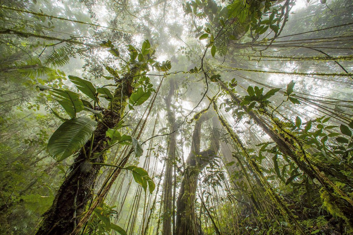 วันคุ้มครองโลก, ป่า