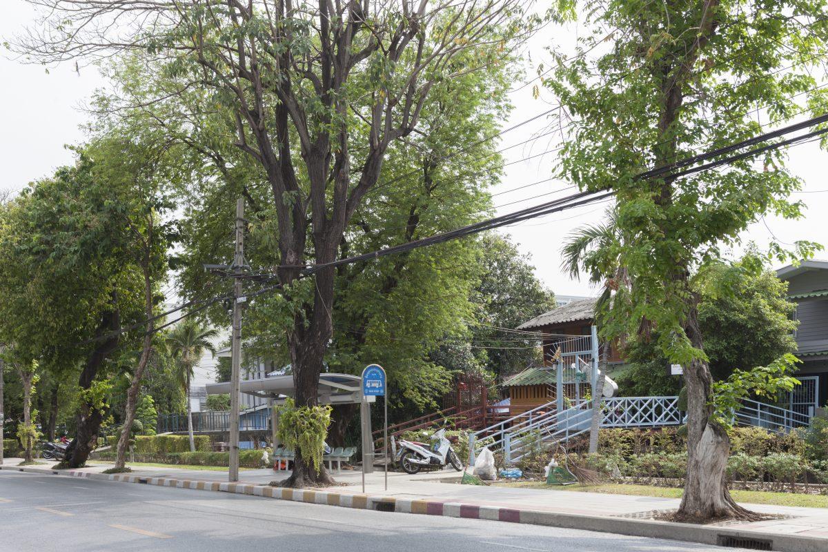 ต้นไม้ริมถนน, เขตดุสิต