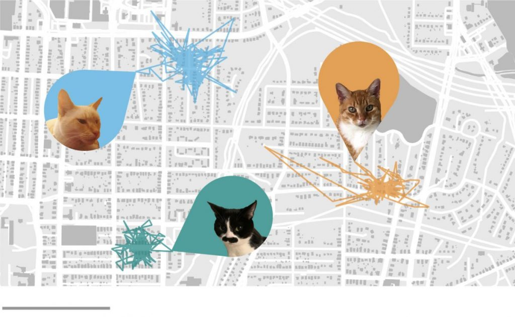 แมวบ้าน, แมว, การเลี้ยงแมวระบบปิด, ทาสแมว